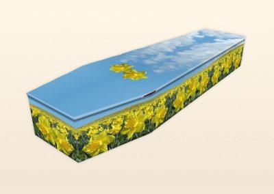 AB290 Field of Daffodils